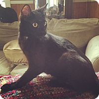 Adopt A Pet :: Duey - Raleigh, NC
