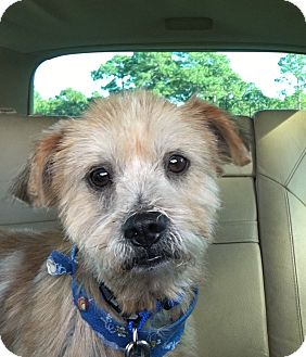 Terrier (Unknown Type, Small) Mix Dog for adoption in Mary Esther, Florida - Spice