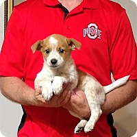 Adopt A Pet :: Jake - New Philadelphia, OH
