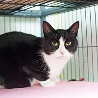 Adopt A Pet :: Bandit 11 - Shelton, WA