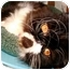 Photo 4 - Persian Cat for adoption in Beverly Hills, California - Tesla
