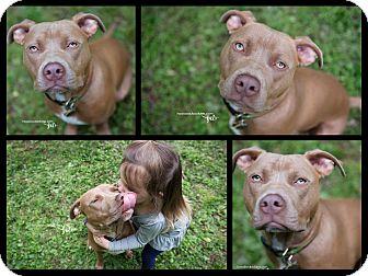Pit Bull Terrier Mix Dog for adoption in Atlanta, Georgia - Monkey