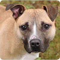Adopt A Pet :: Roxanne - Chicago, IL