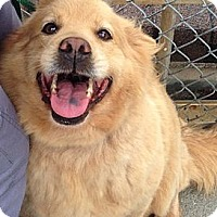 Adopt A Pet :: Hazel - Roanoke, VA