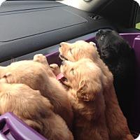 Adopt A Pet :: The Babies - Marlton, NJ