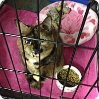 Adopt A Pet :: Babbs - Byron Center, MI
