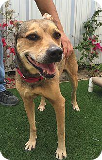 Jindo/Cattle Dog Mix Dog for adoption in Los Angeles, California - Nina