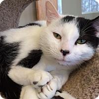 Adopt A Pet :: Wilbur - Byron Center, MI