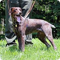 Adopt A Pet :: Abner (aka Jimmy) - Mt Gretna, PA
