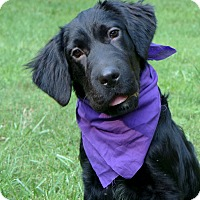 Adopt A Pet :: Elisa - Mocksville, NC