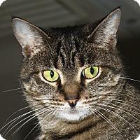 Adopt A Pet :: Lola - North Branford, CT