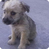 Adopt A Pet :: Cutie - San Diego, CA