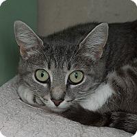 Adopt A Pet :: Bookie - Wilmington, DE