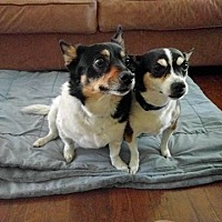 Adopt A Pet :: MANNY & MAX (bonded pair) - Albuquerque, NM