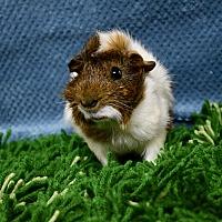 Adopt A Pet :: Walden - Pine Bush, NY