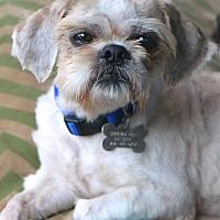 Adopt A Pet :: Trevor - Woonsocket, RI
