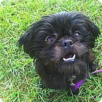Adopt A Pet :: Cinder - Jacksonville, FL