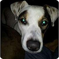 Adopt A Pet :: Molly - Kingwood, TX