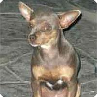 Adopt A Pet :: Princess - Bakersfield, CA