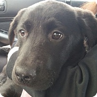 Adopt A Pet :: Missy - Cumming, GA
