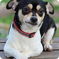 Adopt A Pet :: Chico - Providence, RI