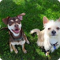 Adopt A Pet :: Kip - Eugene, OR
