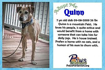 Feist Mix Dog for adoption in Bealeton, Virginia - Quinn