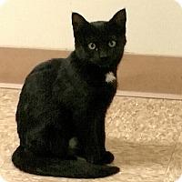 Adopt A Pet :: Pepperdine - Medina, OH