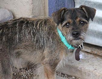 Terrier (Unknown Type, Medium) Mix Dog for adoption in Phoenix, Arizona - Sebastian