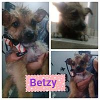 Adopt A Pet :: Betzy - LAKEWOOD, CA