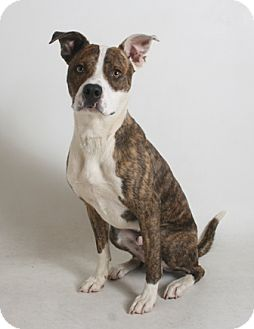 Australian Cattle Dog Mix Dog for adoption in Redding, California - Terry
