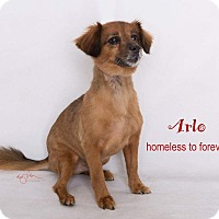 Adopt A Pet :: Arlo - Sherman Oaks, CA
