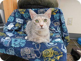 Domestic Shorthair Cat for adoption in Ridgway, Colorado - Alaska