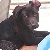 Adopt A Pet :: Bliss Block - Cranston, RI