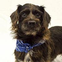 Adopt A Pet :: Winslow - Newport, KY