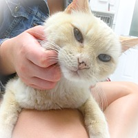 Adopt A Pet :: Cricket - Webster, MA