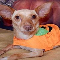 Adopt A Pet :: SUMMER - Upland, CA