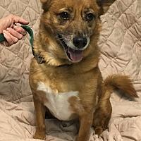 Adopt A Pet :: Duncan - Manchester, CT