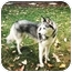 Photo 1 - Siberian Husky Mix Dog for adoption in Sheboygan, Wisconsin - Nanook