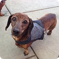 Adopt A Pet :: Smoochie - Atascadero, CA