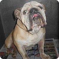 Adopt A Pet :: Fran - Winder, GA