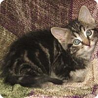 Adopt A Pet :: Boyd - Dallas, TX