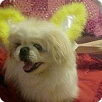 Adopt A Pet :: DARWIN - Cathedral City, CA