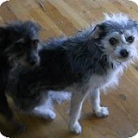 Adopt A Pet :: Ruthie Beans - dewey, AZ