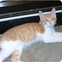 Adopt A Pet :: Felix - Greenville, SC