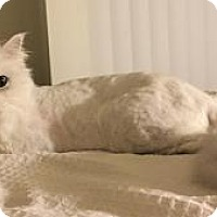 Adopt A Pet :: Rosie - Beverly Hills, CA