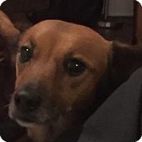 Adopt A Pet :: Caray - Decatur, GA