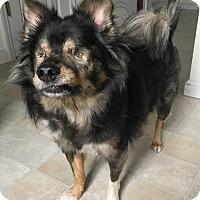 Adopt A Pet :: Maui - O'Fallon, MO