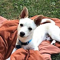 Adopt A Pet :: Mark-Charly - Hockessin, DE