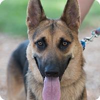 Adopt A Pet :: Coco - Dacula, GA